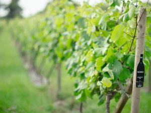 EVENING VINEYARD TOUR AND TASTING WITH THREE COURSE MEAL