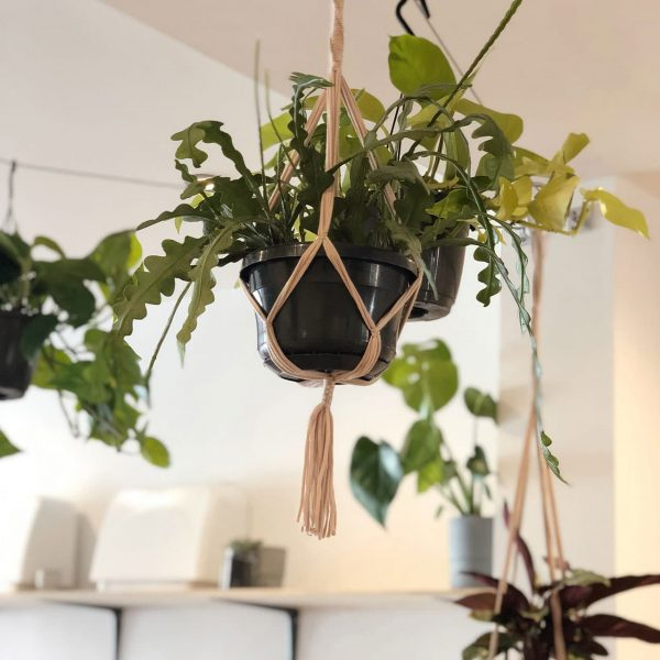 Macramé Plant Pot Holder Group Workshop