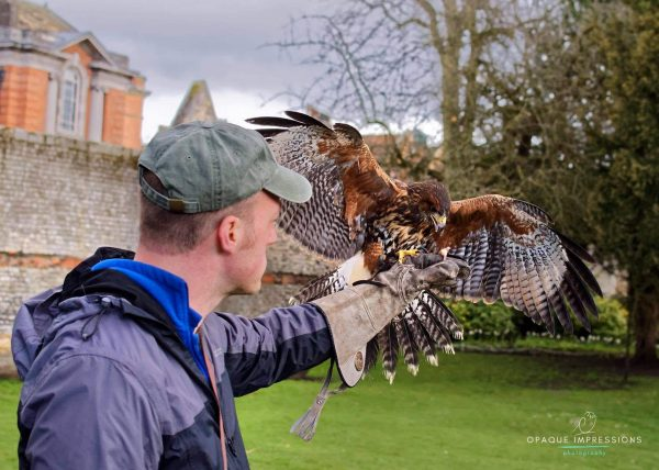Bird of Prey Flying Experience