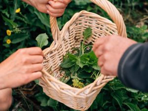 Foraging Course for Two People