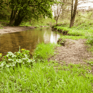 Yorkshire Walks - Forge Valley Woods